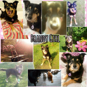 Collage 2017 Brandy