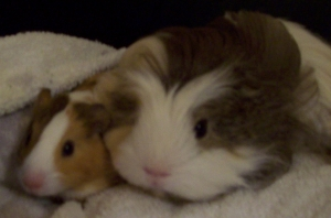 Nibbler and wee man