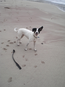 ivor mellon udrigle beach (2)