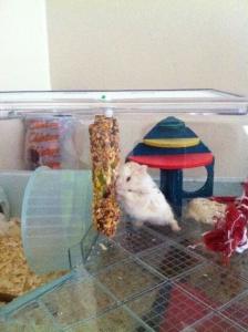 molly hamster1