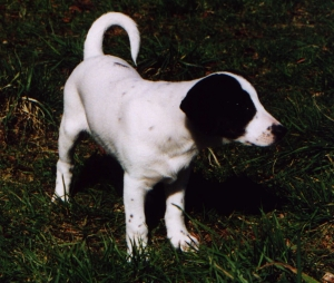 nobledog (2)